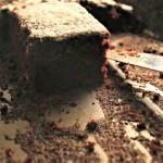Easy Chocolate Cake di Martha Stewart